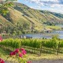 Lewis-Clark Valley Wine Grapes at Rivaura Estates
